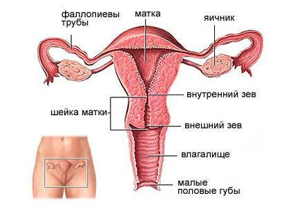 обследование от паразитов